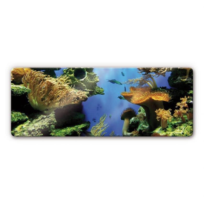 Panorama-Glasbild Korallenriff - sehenswerte Unterwasserwelt | wall ...