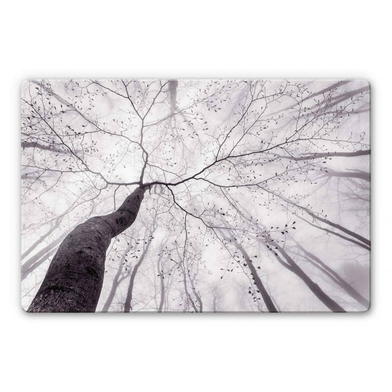 Tableau en verre Pavlasek - Vers la cime des arbres