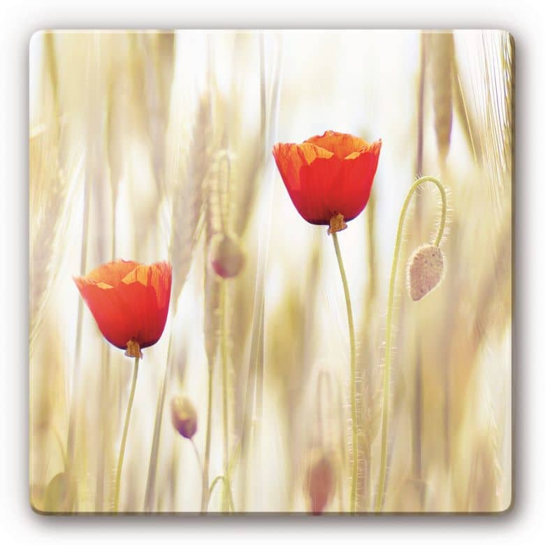 Glasbild Poppies