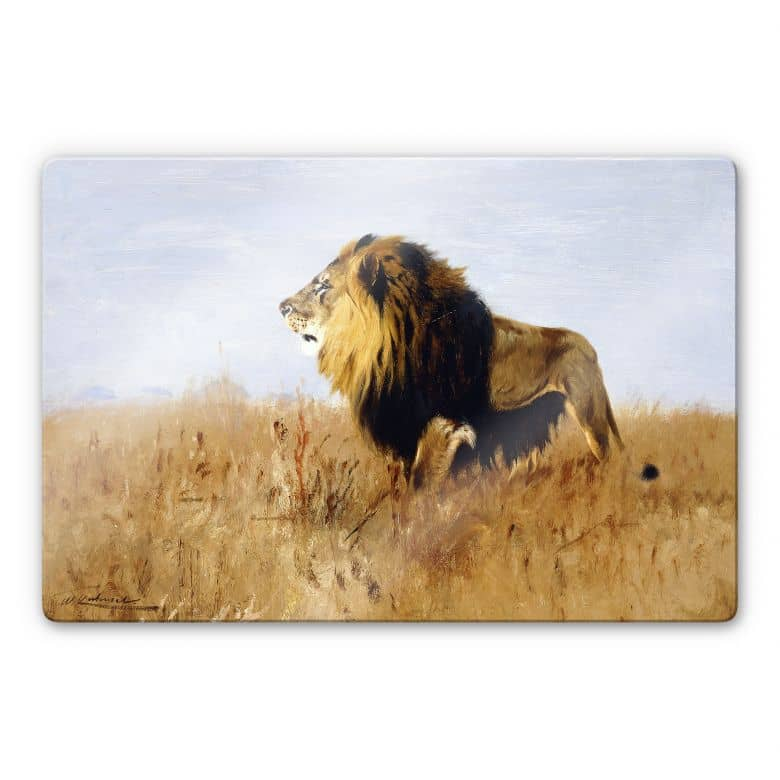 Glasbild Kuhnert - Löwe auf der Suche nach Beute