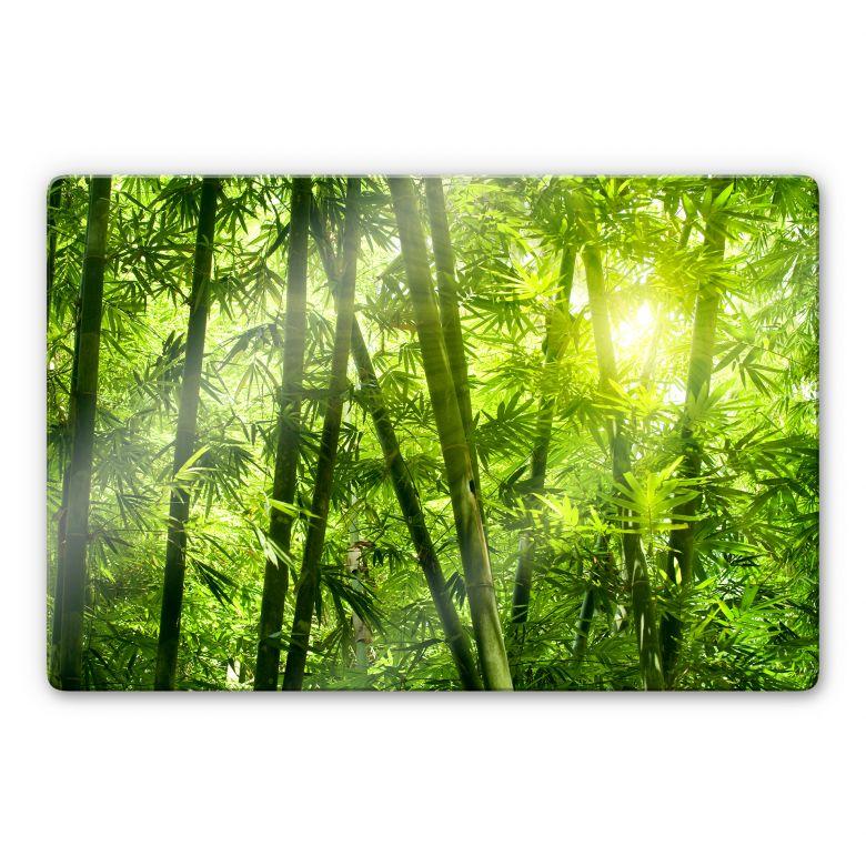 Glasbild Sonnenschein im Bambuswald