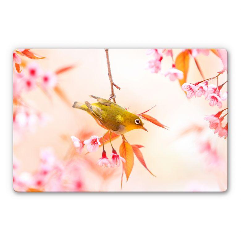 Glasbild Vogelgezwitscher in der Kirschblüte