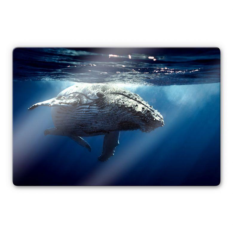 Tableau en verre - Baleine à bosse en plongée