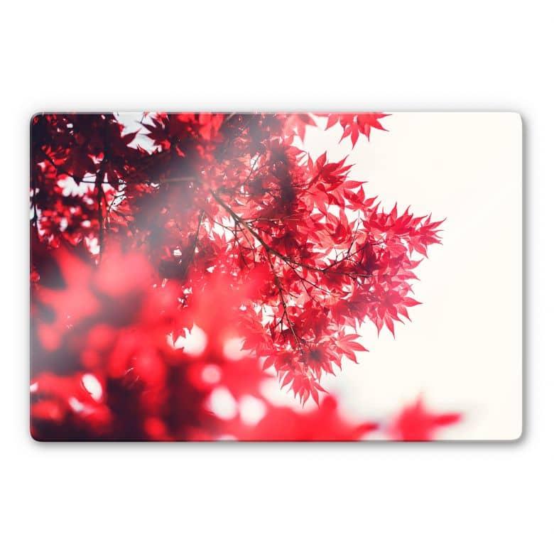 Glasbild Ahornbaum im Herbst