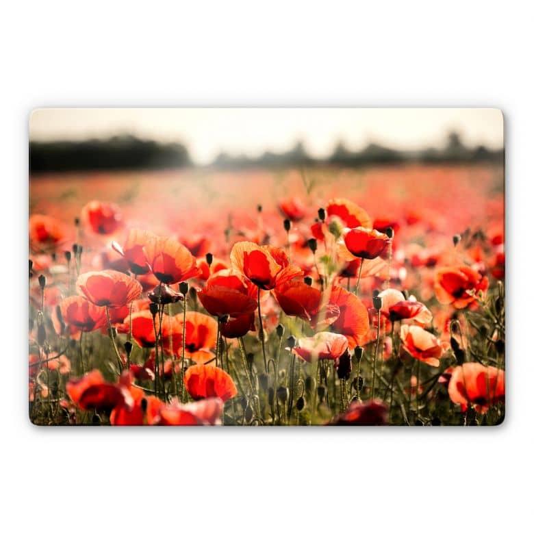 Glasbild Poppy Field