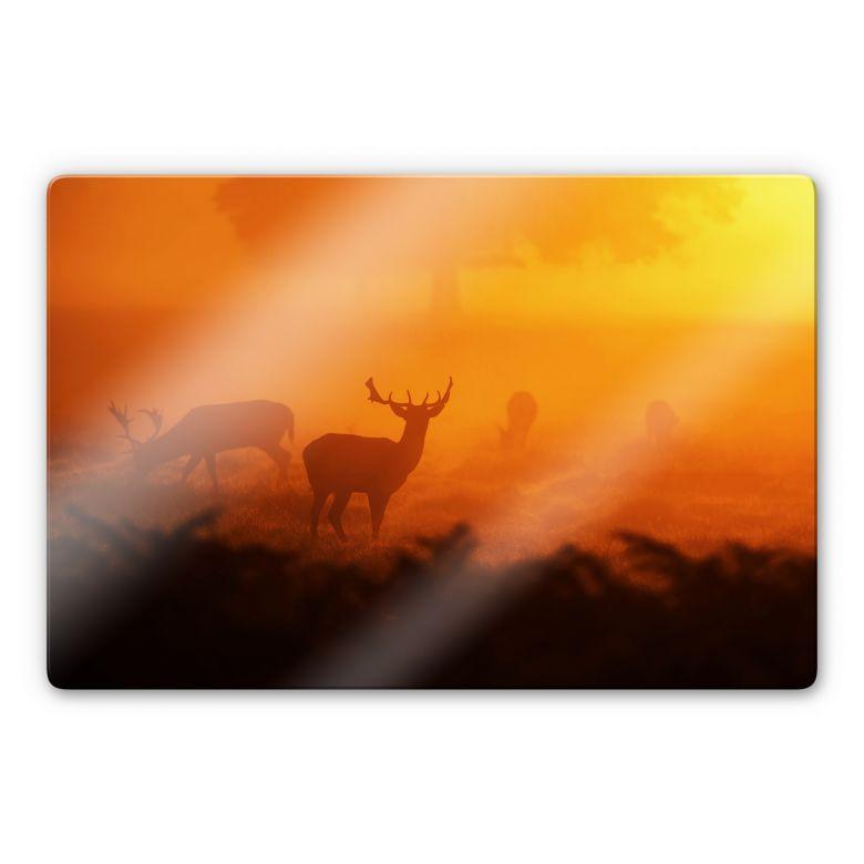Glasbild Hirsche im Sonnenuntergang