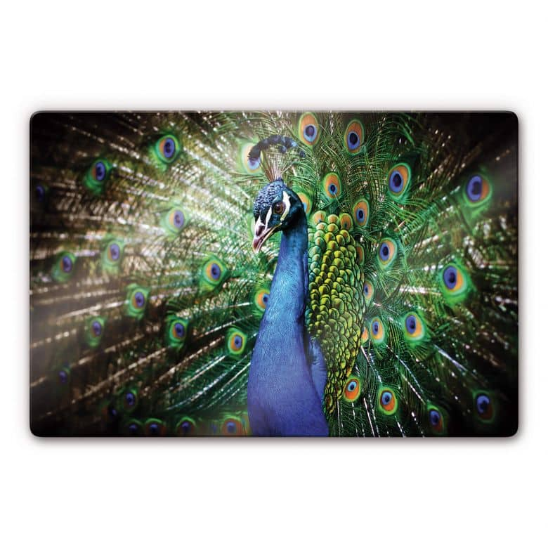 Beautiful Peacock Glass art
