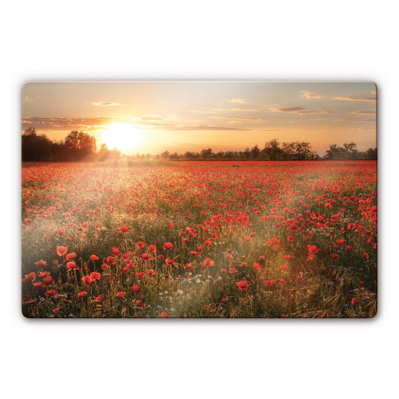 Poppy Field in Sunset Glass art