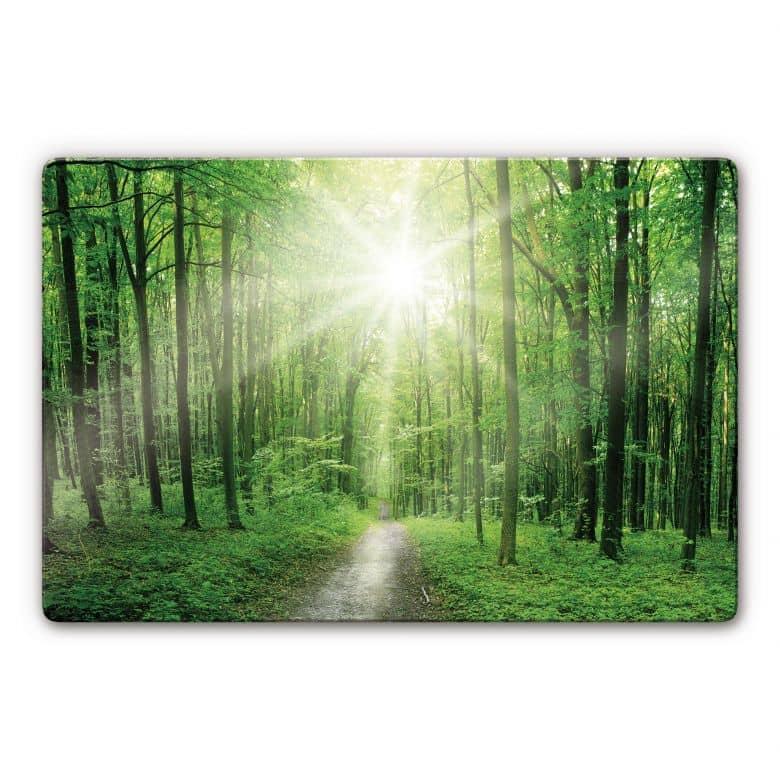 Tableau en verre - Sunny Forest