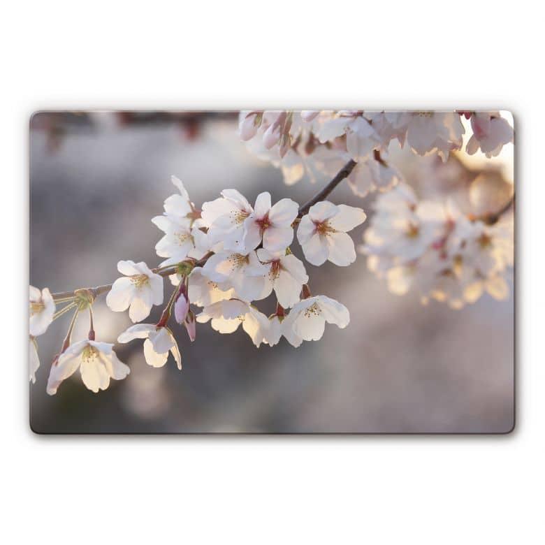 Tableau en verre - Branche de cerisier