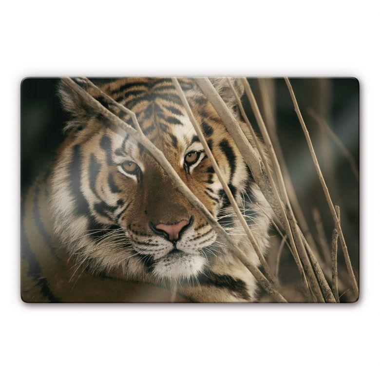 Glasbild NG Tiger
