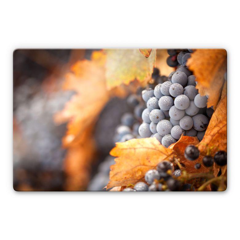 Glasbild Wein im Herbst