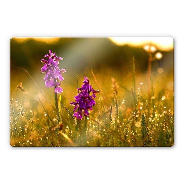 Glasbild Blumen im Morgentau