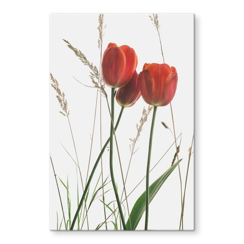 Glasbild Kadam – Flora Tulpe