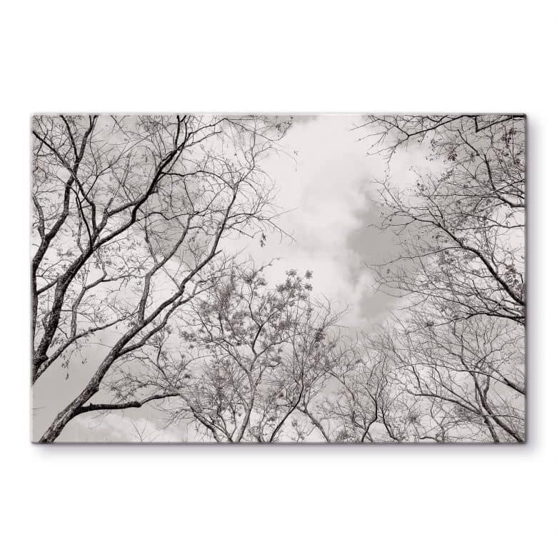 Glasbild Baumkronen im Himmel