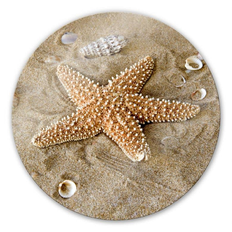 Glasbild Patrick der Seestern - rund