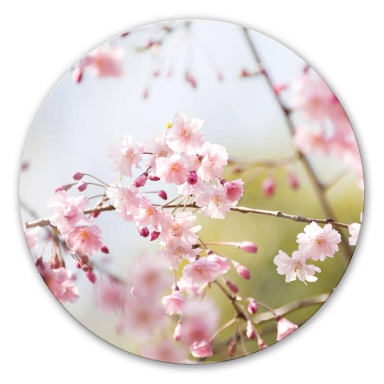 Glasbild Cherry Blossoms - rund