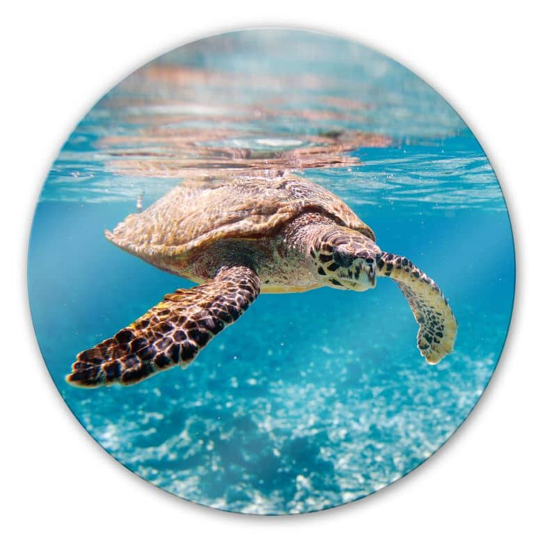 Swimming Turtle - Round Glass art