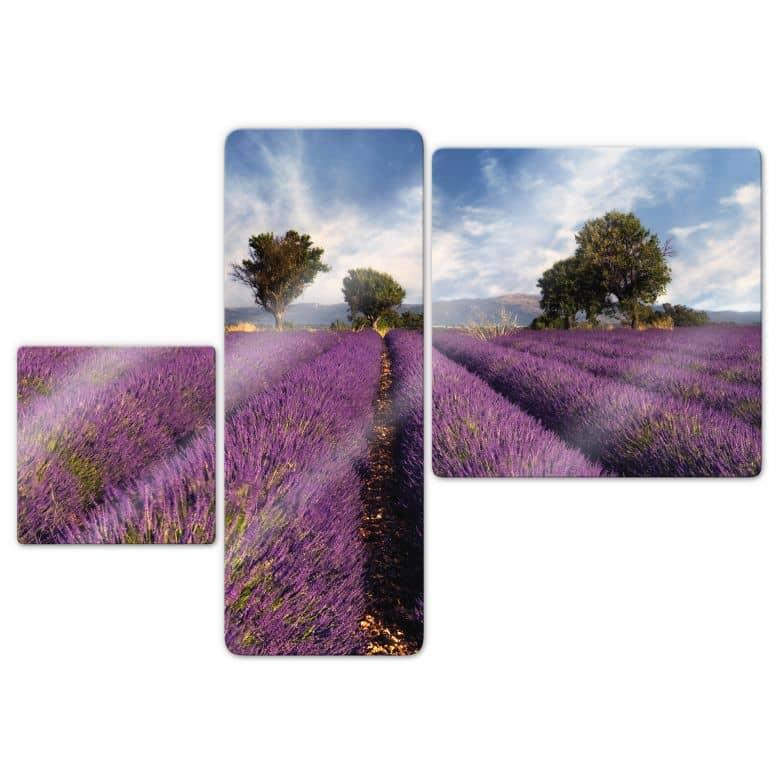 Glasbild Lavendelfeld (3-teilig)