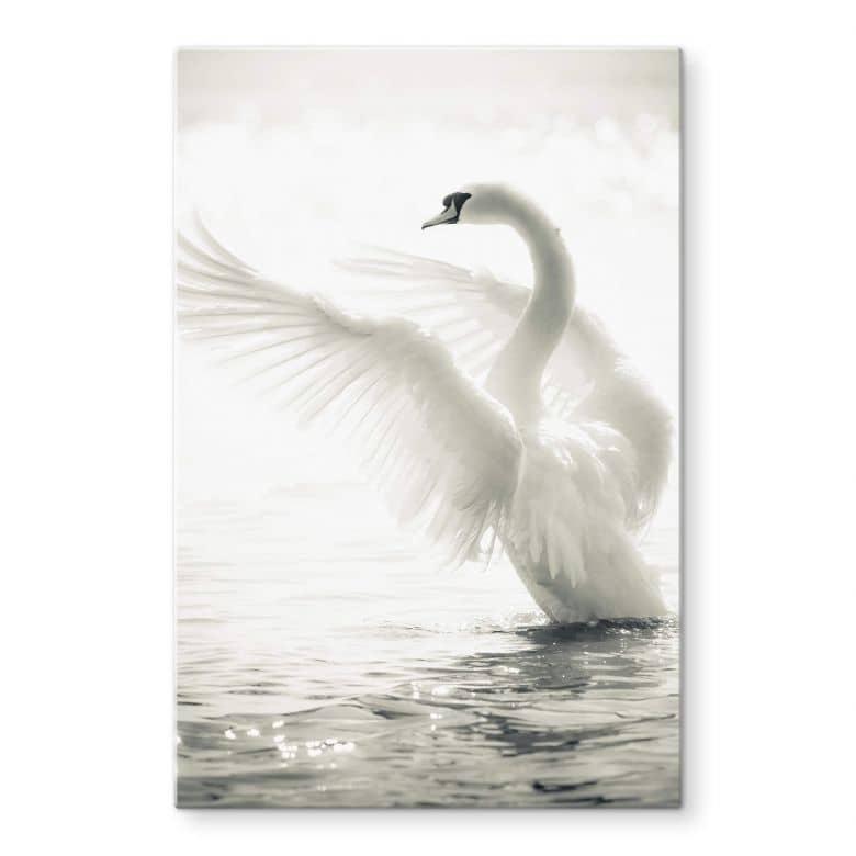 Proud Swan Glass art