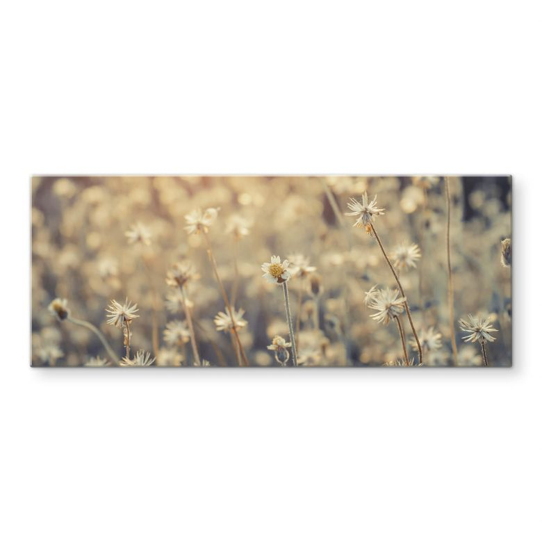 Glasbild Mexican Daisy - Panorama