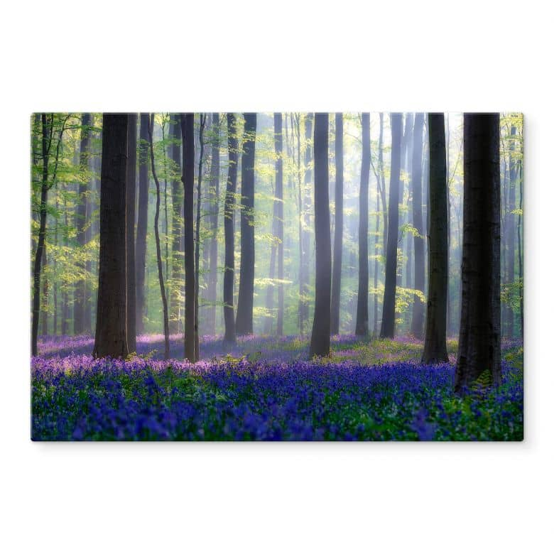 Glasbild Popan - Glockenblumen
