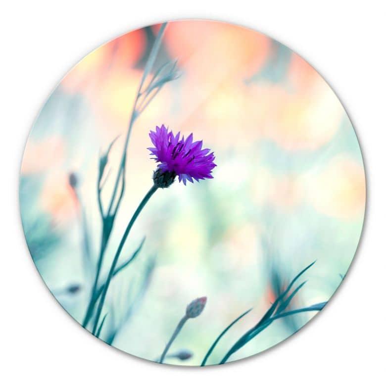 Glasbild Bravin - Luminous purple - rund
