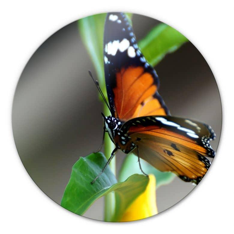 Glasbild Kleiner Falter - rund