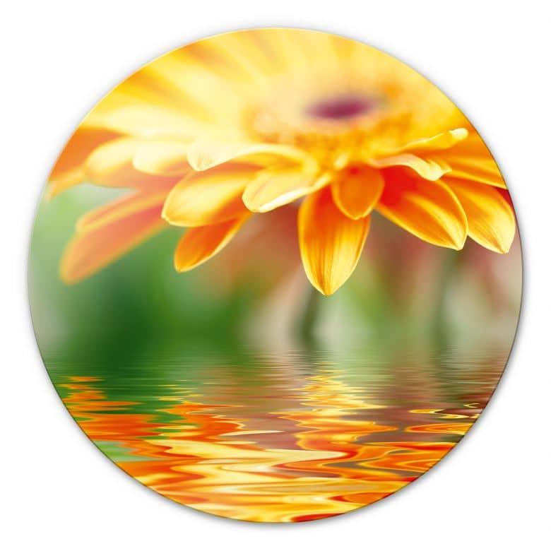 Glasbild Gerbera Spiegelung - rund