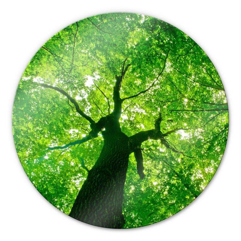 Stampa su vetro - Sotto gli alberi - tondo