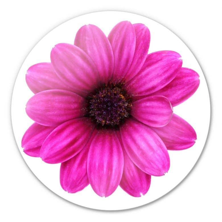 Glasbild Gerbera pink - rund