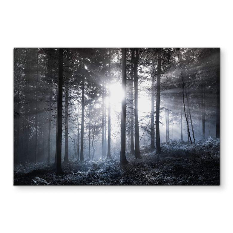 Glasbild Sonnenstrahlen im Wald Blau