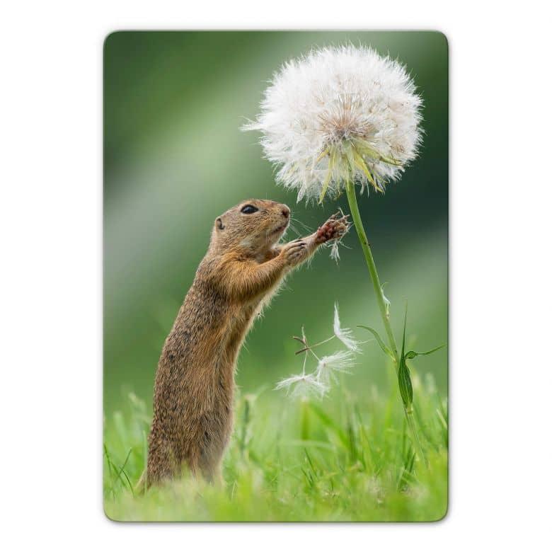 Glass print Dick van Duijn - Squirrel with dandelion