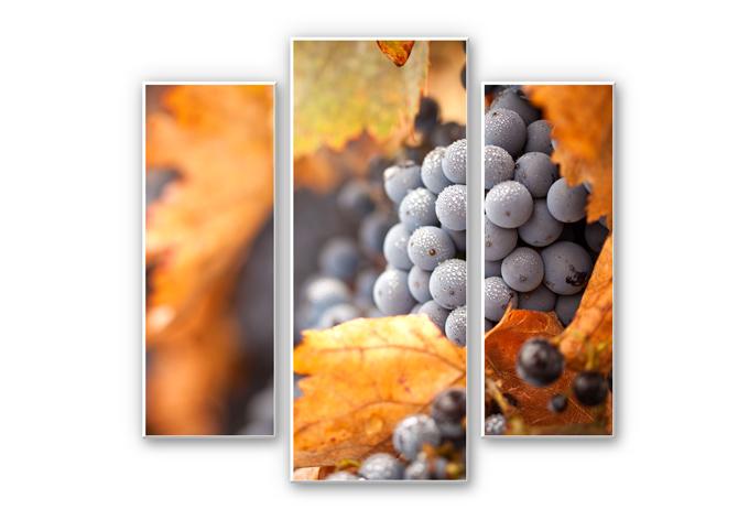 Wandbild Wein im Herbst (3-teilig)