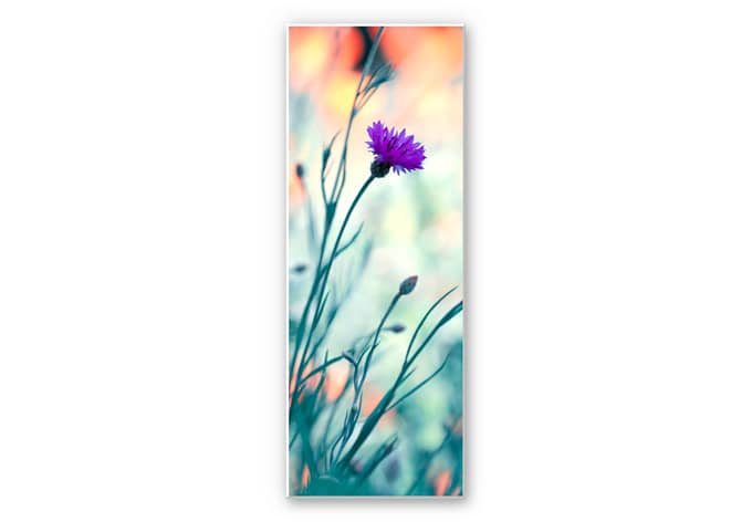 Wandbild Bravin - Luminous purple - Panorama