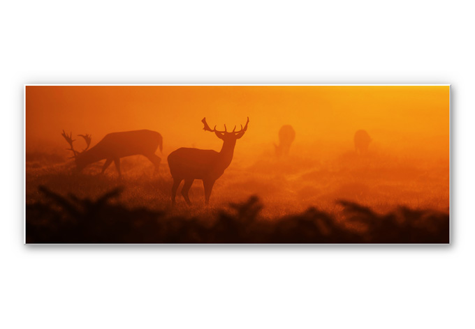 Wandbild Hirsche im Sonnenuntergang - Panorama