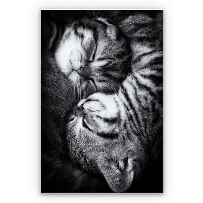 Wandbild Jancova - Sweet Kitten
