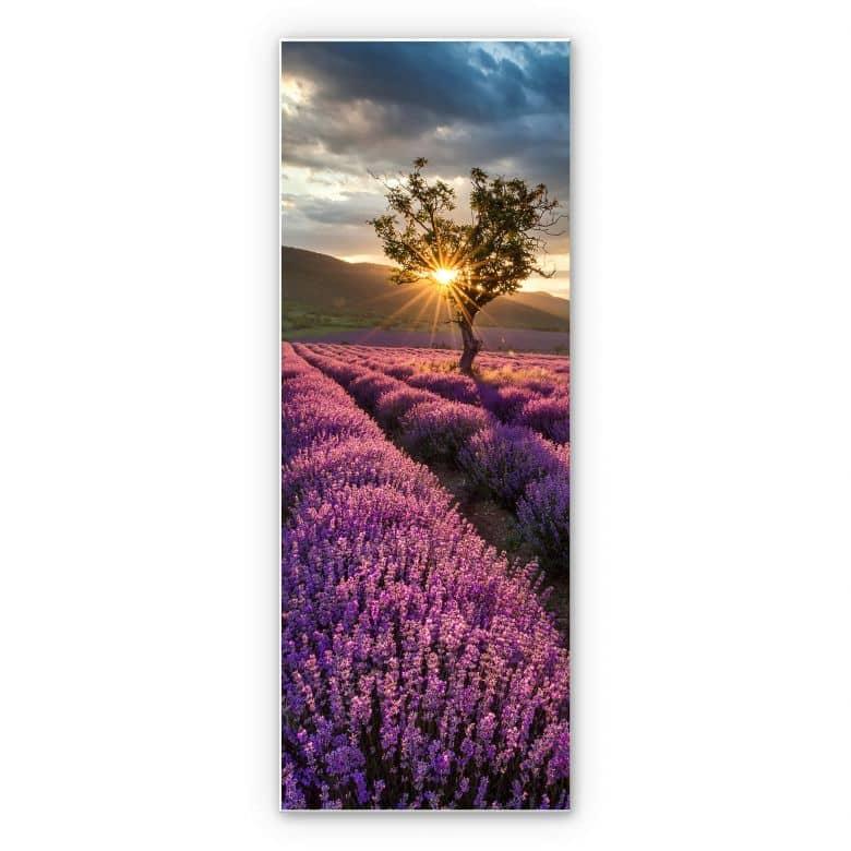 Wandbild Lavendelblüte in der Provence - Panorama 02