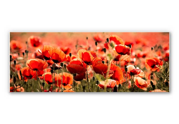 Wandbild Poppy Field - Panorama