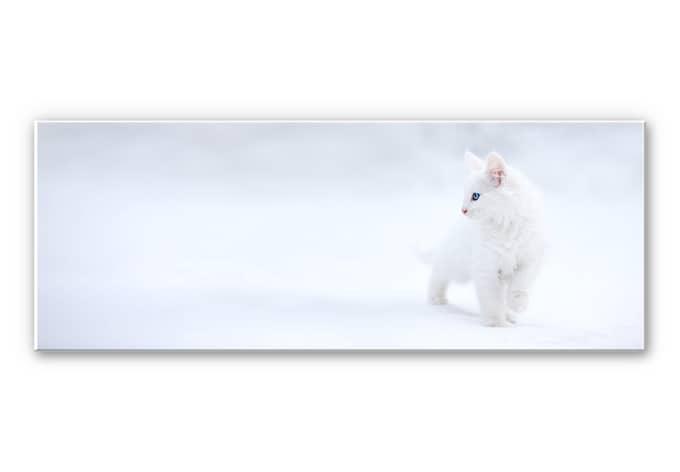 Wandbild Prexus - Weißer als Schnee