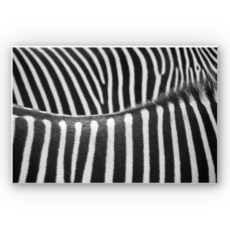 Wandbild Zebramuster