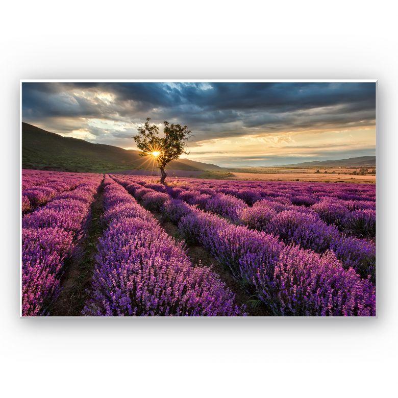 Wandbild Lavendelblüte in der Provence