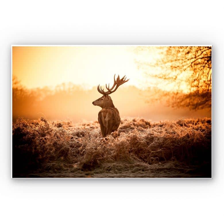 Wandbild Majestätischer Hirsch