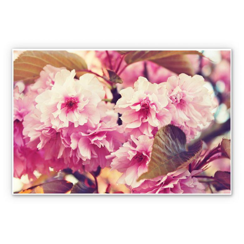 Tableau Forex - Fleurs de cerisier vintage