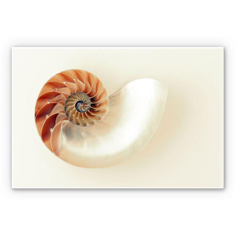 Wandbild Nautilus