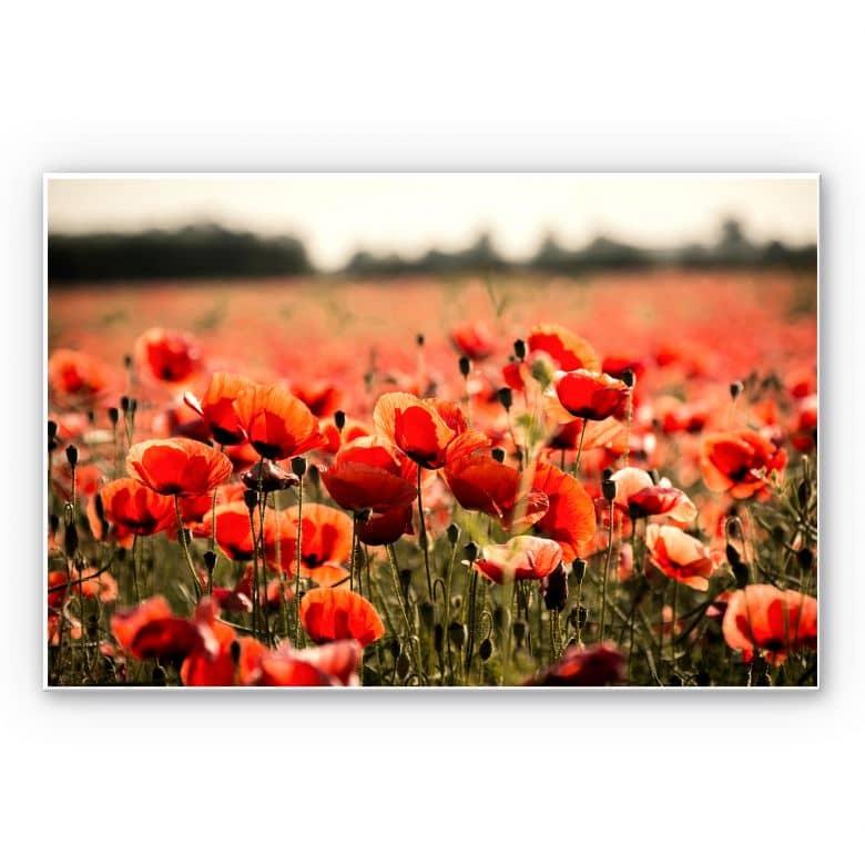 Wandbild Poppy Field