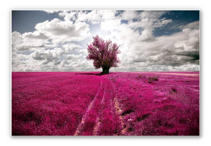 Wandbild The Lonely Tree