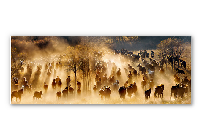 Wandbild Zhu - Wildpferde in den Bergen - Panorama