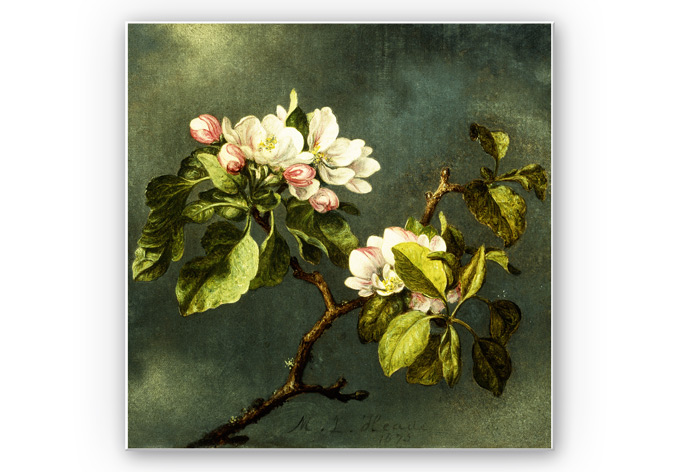 Wandbild Heade - Apfelblüten