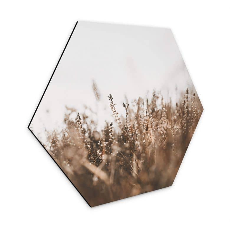 Hexagon Dibond Annie - Meadow Grass
